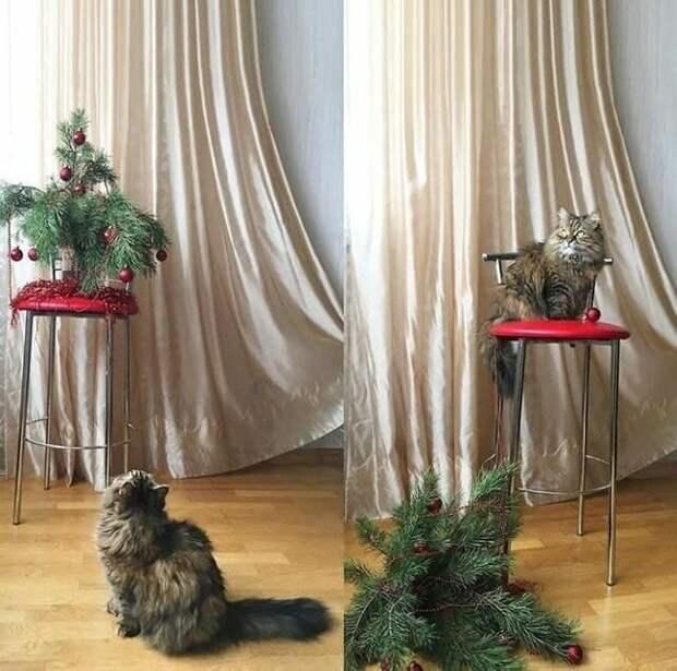 14. На Новый год они обязательно уронят елку. Потому что так положено Кошка в доме, домашние животные, забавные фото с котами., кошка, кошки, фото кошек, хозяева животные, юмор