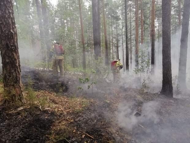 В Екатеринбурге из-за неосторожности отдыхающих разгорелся пожар во втором лесопарке