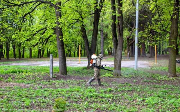 В рязанских парках прошла обработка от клещей