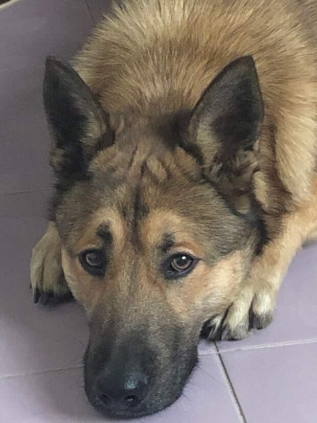 Подруга просила приютить щенка, выброшенного в мусорник. Девушка не соглашалась, пока не увидела его фото