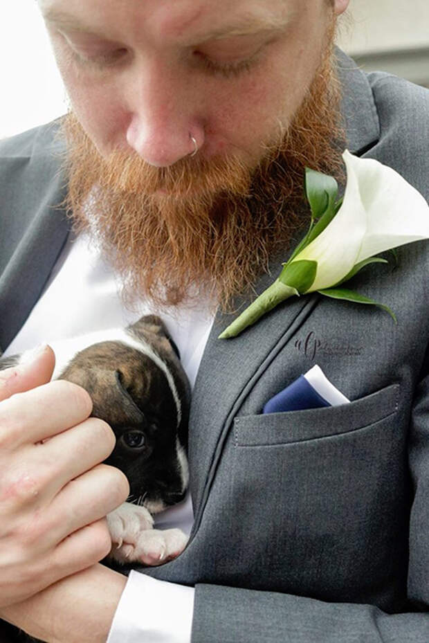 Кроща-щенок на руках у жениха