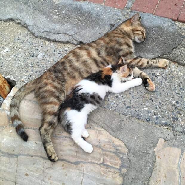 Кошка Мила не принимала нового котенка, а потом стала заботиться как о родном. Рассказываю, что произошло