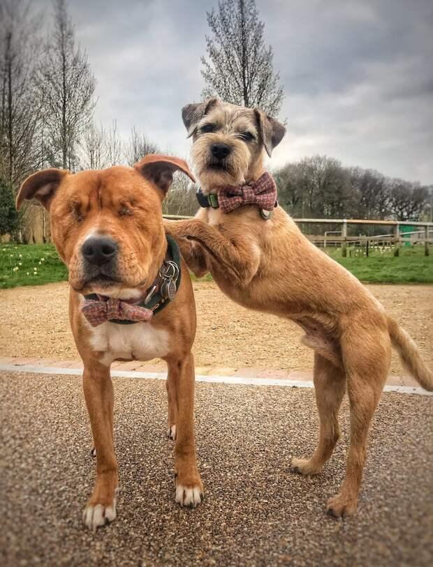 Собака стала поводырём для слепого друга