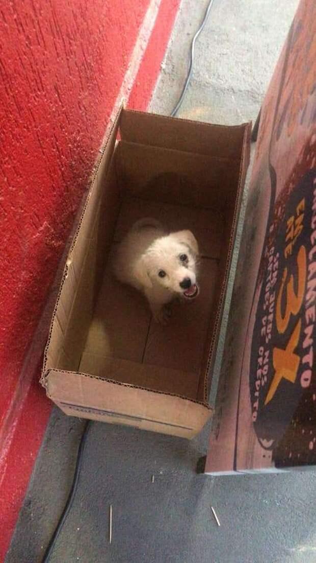 щенок в картонной коробке