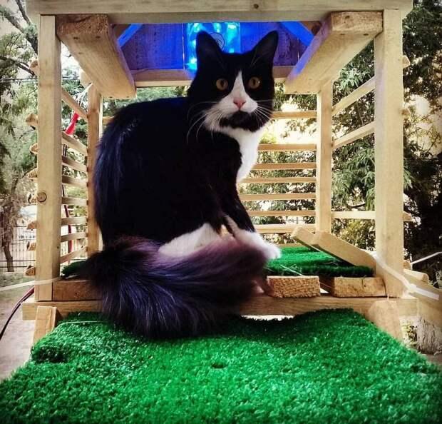 Житель Волгограда построил кошке отдельный выход из квартиры