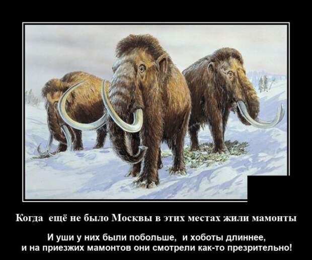 Демотиватор про мамонтов