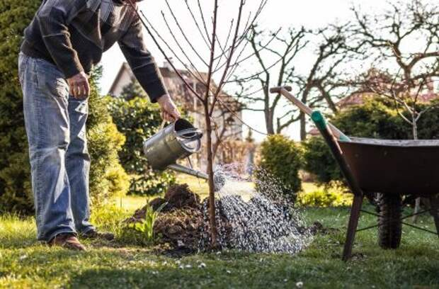 5 способов быстро подкормить деревья и кусты