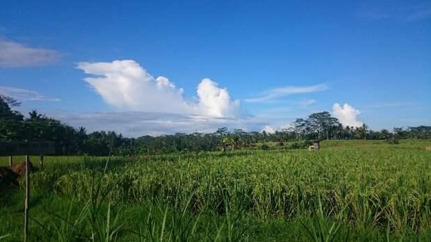 Природа Бали: горы, джунгли, водопады и рис!