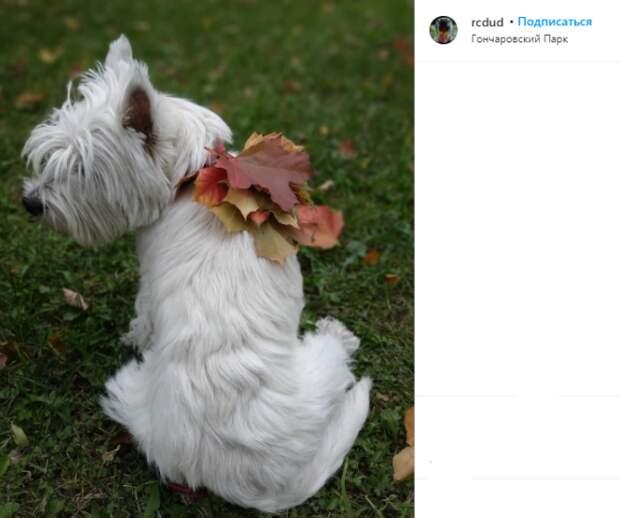 Фото дня: в Гончаровском парке собака примерила «ожерелье» из листьев