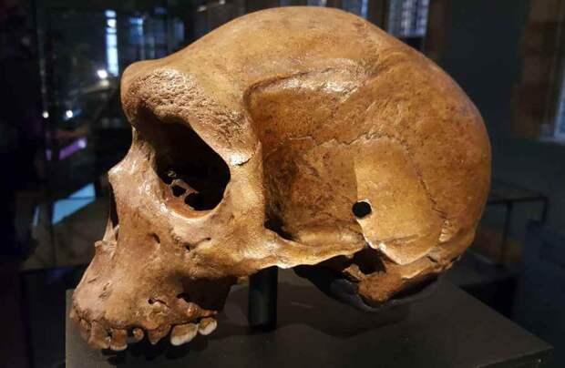 Загадка «Родезийского черепа», или «Огнестрел» возрастом 300 тысяч лет
