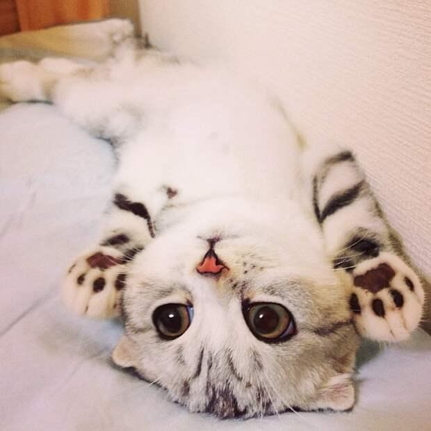 20 прелестных котят, которыми можно умиляться бесконечно