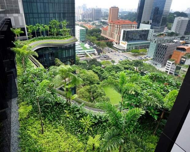 Parkroyal17 800x642 Уникальный сад на фасаде отеля в Сингапуре