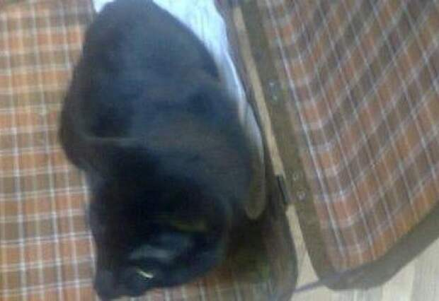 Кота спасли, достав из чемодана