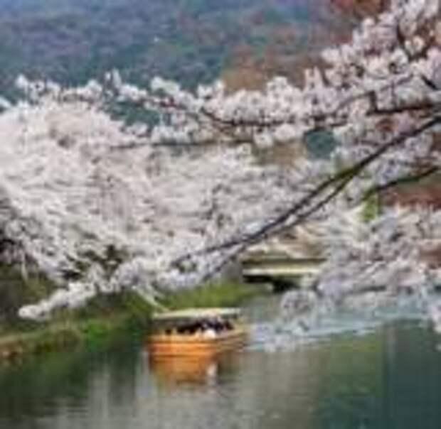 Когда и где полюбоваться сакурой в Японии в 2020-м году