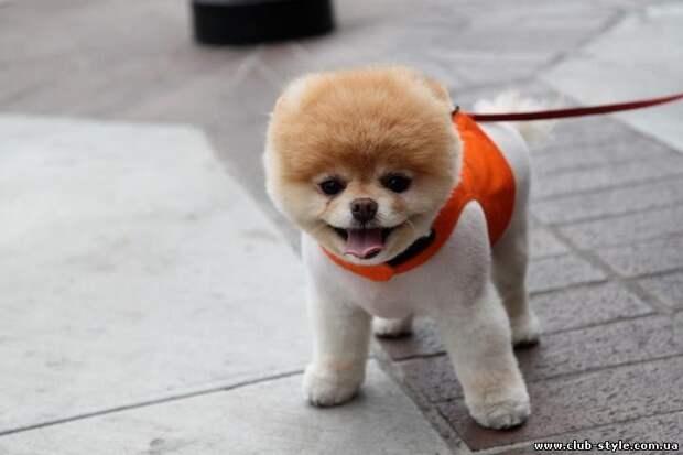 Доза умиления - невероятные маленькие собачки