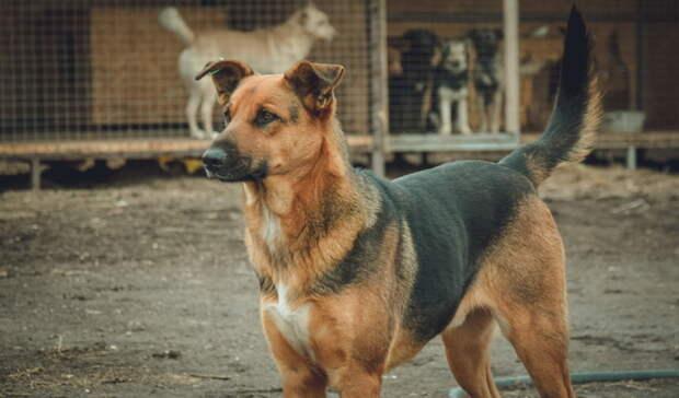 Оренбуржье попало вТОП-5 регионов поколичеству бездомных собак