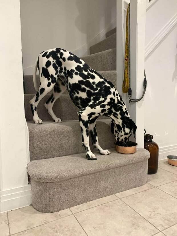Нелепые фотки собак, выложенные в Сеть хозяевами: «что с ними не так?»