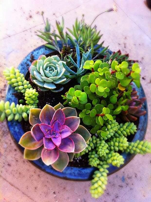Висячие сады или сад в горшке — очаровательные идеи для участка!