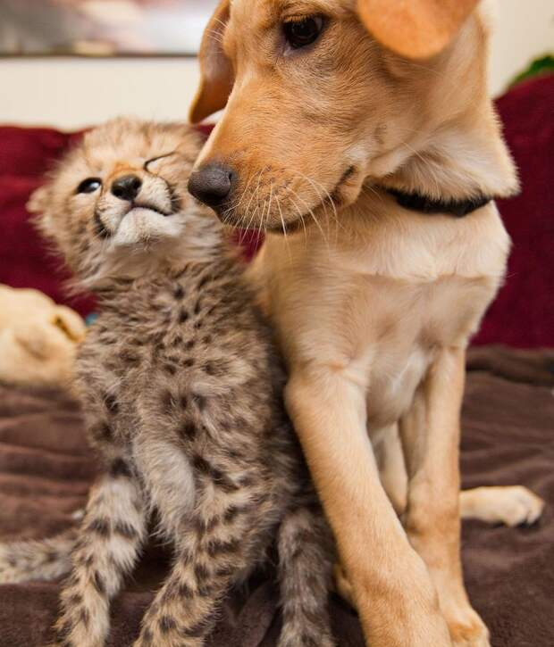 slide 221442 885491 free Про дружбу кошек с собаками