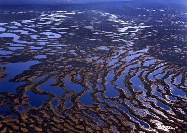 Фото с сайта http://animalworld.com.ua/