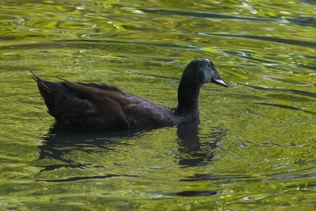 Фото дня: Каюга на пруду в Медведкове