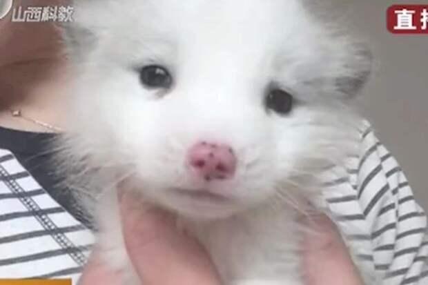 dog-thats-a-fox