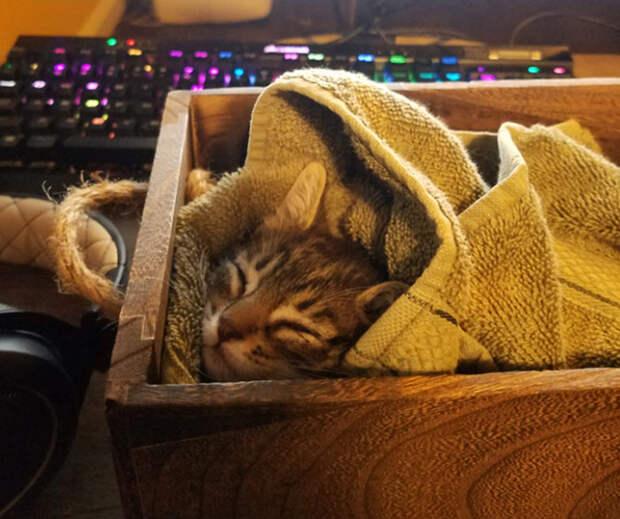 17 доказательств, что котики даже во сне легко очаровывают людей