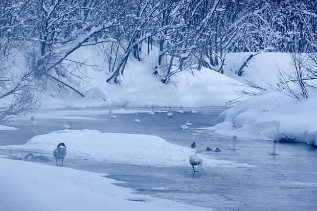Красоты России. Лебединая Камчатка