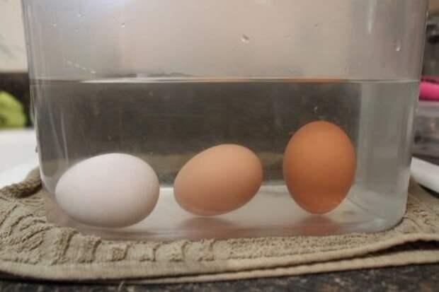 Свежее яйцо ляжет на бок. / Фото: vse-pro-kur.ru