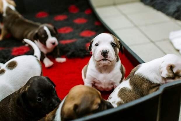 Беременную собаку выбросили на улицу, где бедняжка родила 12 щенков