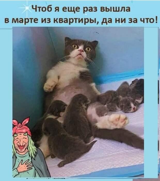 Возможно, это изображение (2 человека, кот и текст «чтоб я еще раз вышла в марте из квартиры, да ни за что!»)