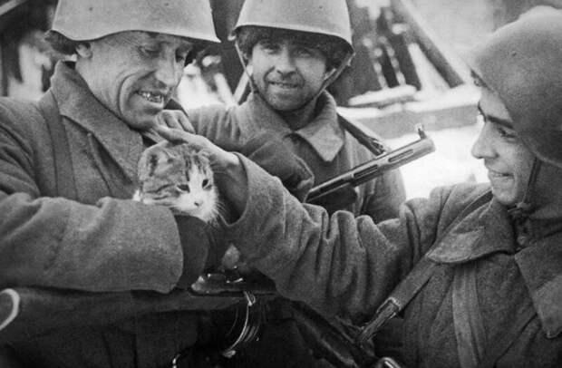 Рыжий кот-слухач с зенитной батареи