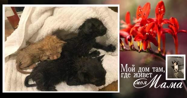 Спасенные котята лежали на столе… Через несколько часов парень нашел на улице и бродячую кошку – но их ли это мама? Смотрим….)