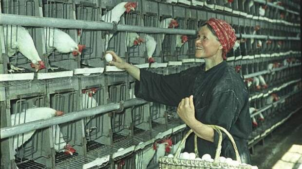 Ударница птицефабрики колхоза «Новый путь».
