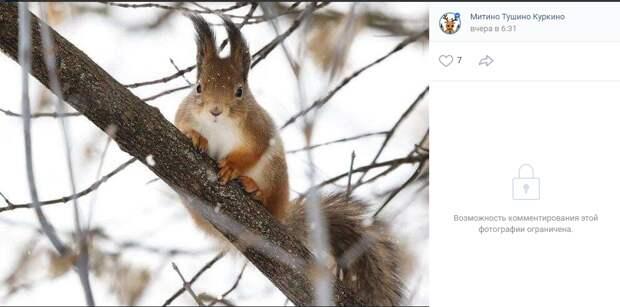 Фото дня: зимние будни  белки в парке Южного Тушина
