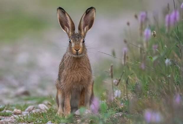 Итоги опроса: жители Северного Тушина встречали зайцев на парковых территориях