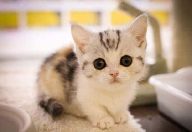 Никакого фотошопа, эта кошка действительно существует!