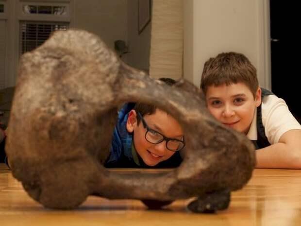 2. Кость мастодонта археология, дача, находки, удивительное рядом