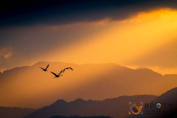 Taku Ono / ©Bird Photographer of the Year 2021