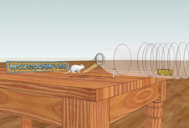 Инструкция по изготовлению гуманной мышеловки
