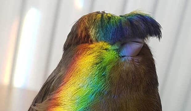 Когда отрезал себе челку на карантине: 9 смешных фото птицы с дурацкой прической