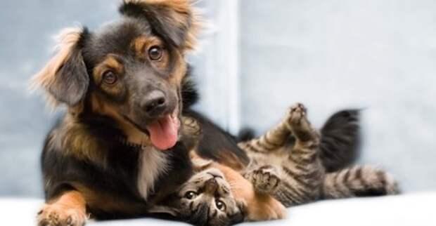 Беременная собака, которая сама без дома, приютила целое семейство котят