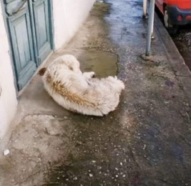 Раненая собака сделала пару шагов и обессиленно упала перед дверью чужого дома