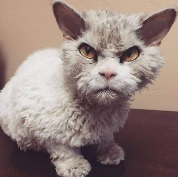 12 разгневанных, но все еще милых котов