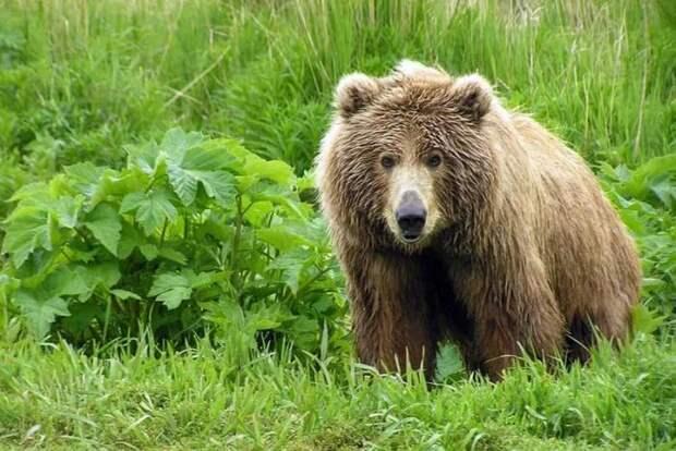 Животные, которые скоро могут исчезнуть (10 фото)