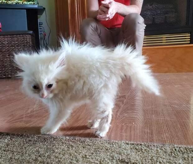 Девушка принесла в дом тощую, грязную котейку. Та даже глазки не успела открыть и нуждалась в помощи