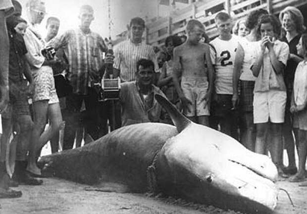 Самые огромные акулы пойманные человеком
