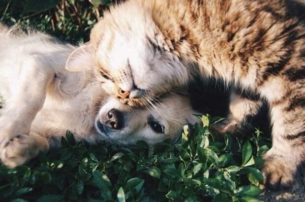 Институт Россельхознадзора начал выпуск вакцины от COVID-19 для животных