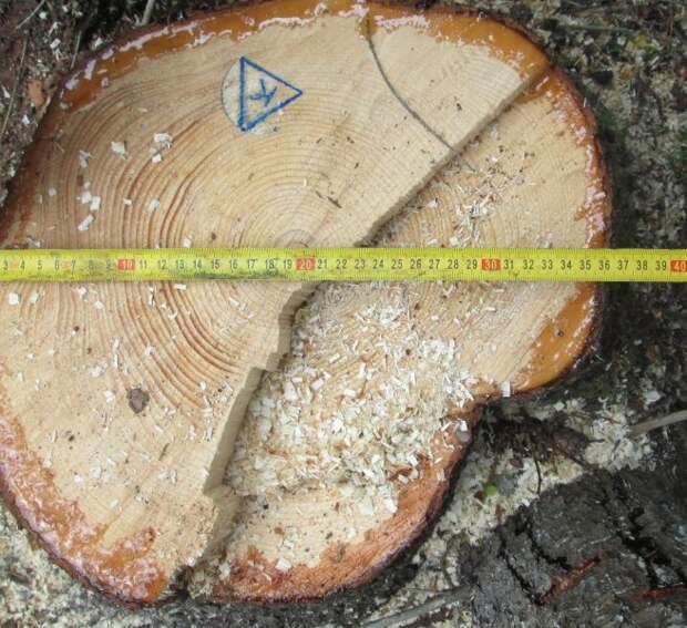 Житель Удмуртии нарубил леса на 7 лет колонии