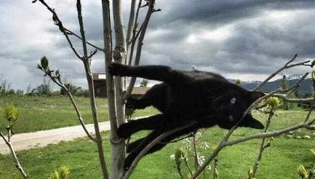 Притяженья больше нет: 30 котиков, которые плевать хотели на законы физики